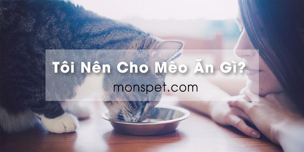 Tôi nên cho mèo ăn gì?