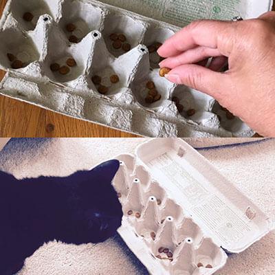 Có thể tự làm puzzle feeders cho mèo bằng đồ dùng trong nhà như hộp trứng