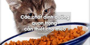 Các dinh dưỡng quan trọng cần thiết cho mèo