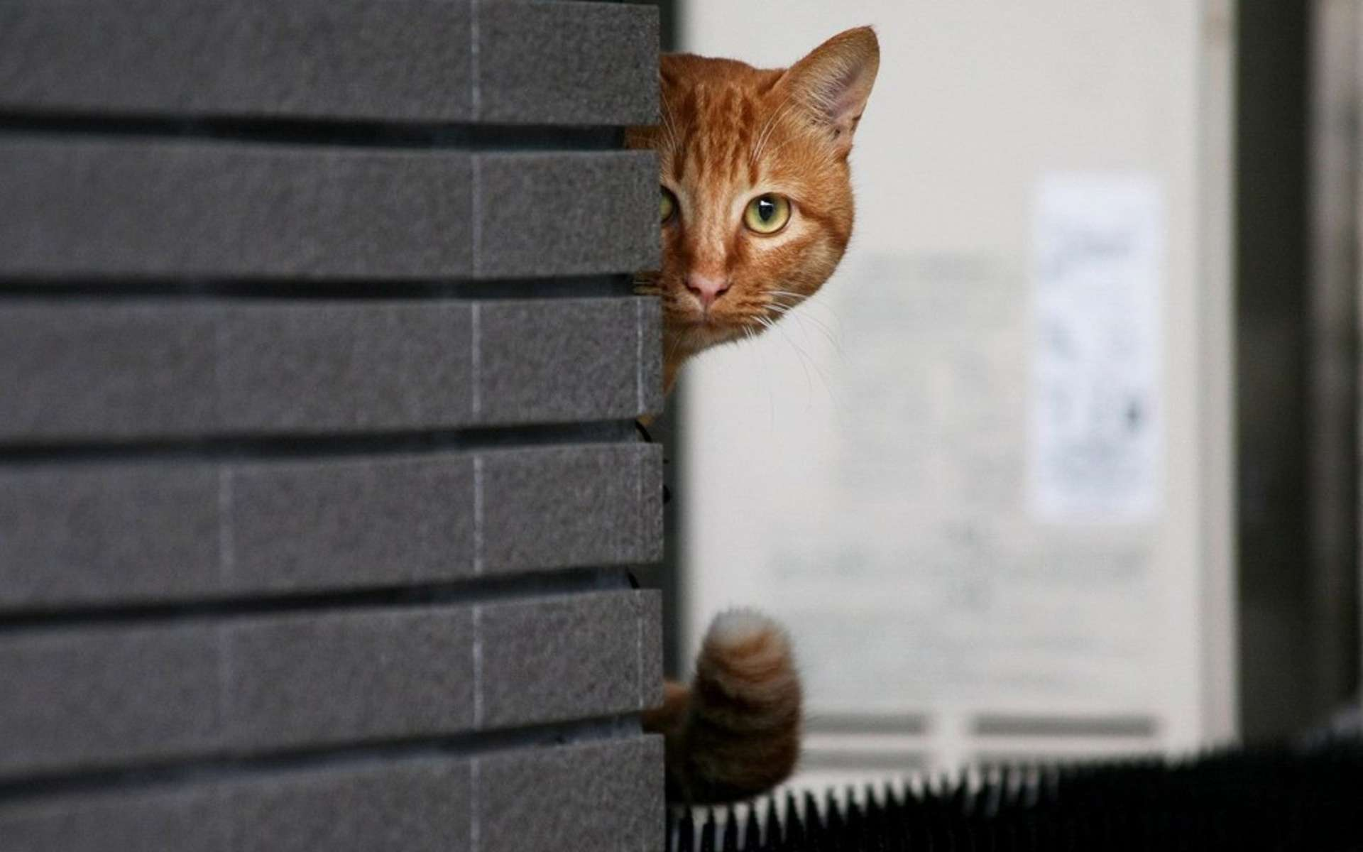 Chơi trốn tìm với mèo