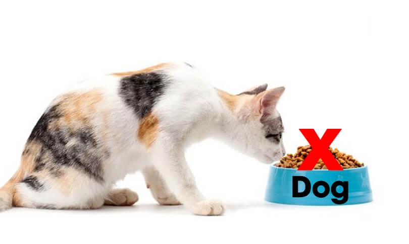 Mèo không nên ăn thức ăn dành cho chó | Dinh dưỡng cần thiết cho mèo