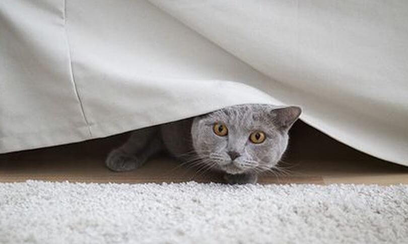 Mèo bị stress, căng thẳng cũng là nguyên nhân ảnh hưởng đến việc cho mèo ăn | dinh dưỡng cần thiết cho mèo