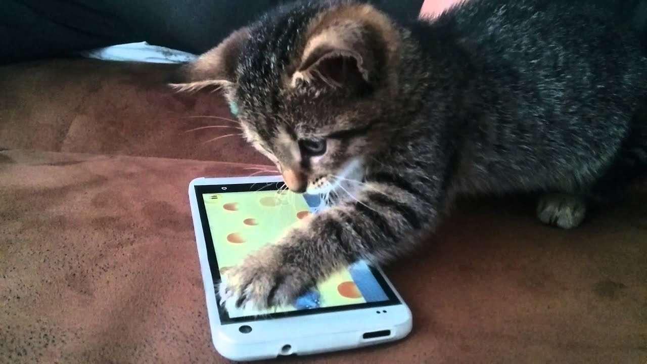 Mèo chơi game trên smartphone