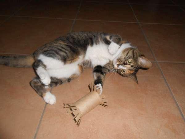 Mèo chơi với cuộn giấy