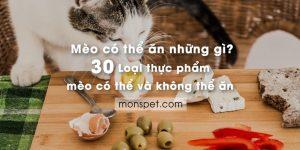 Mèo có thể ăn gì? 30 thực phẩm mèo có thể và không thể ăn