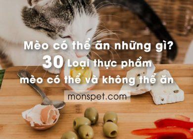 Mèo có thể ăn những gì? 30 thực phẩm mèo có thể và không thể ăn | 2020