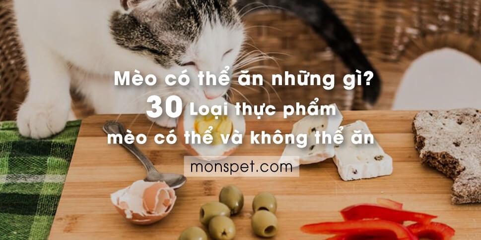 Mèo có thể ăn những gì? 30 thực phẩm mèo có thể và không thể ăn