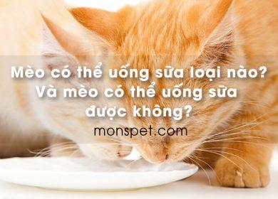 Mèo có thể uống loại sữa nào? Và mèo có thể uống sữa được không?