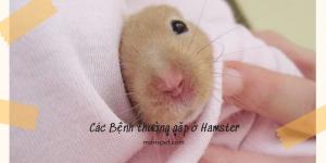 Các Bệnh thường gặp ở Hamster