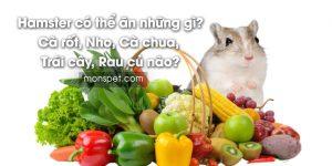 Hamster có thể ăn những gì? Cà rốt, Nho, Cà chua, Trái cây, Rau củ nào?