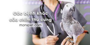 Các bệnh thường gặp của chim thú cưng (Phần 2)