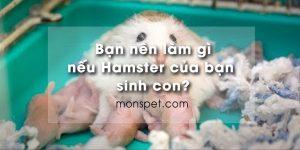 Bạn nên làm gì nếu Hamster của bạn sinh con?