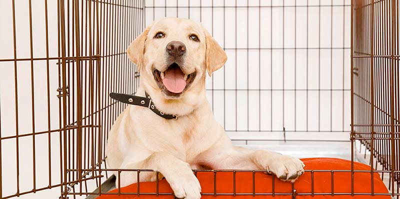 Huấn luyện chó trong cũi | Từ A - Z các mẹo huấn luyện chó nghe lời