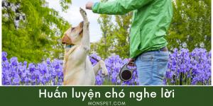 Từ A – Z các mẹo huấn luyện chó nghe lời