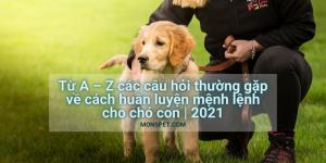 Từ A – Z các câu hỏi thường gặp về cách huấn luyện mệnh lệnh cho chó con | 2021