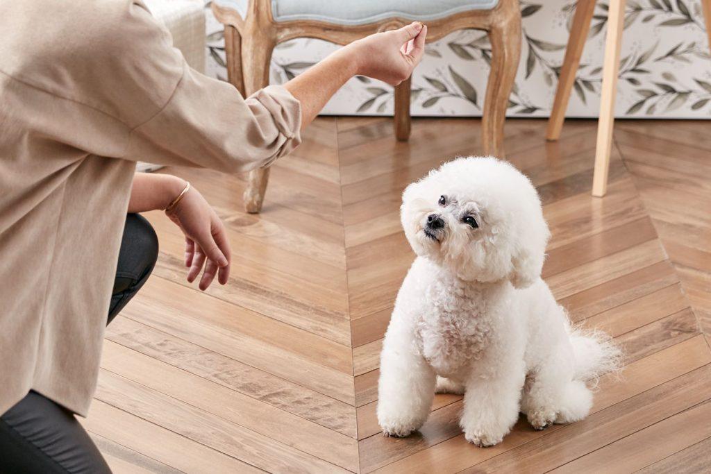Cách dạy chó ngồi | Cách huấn luyện chó con 5 mệnh lệnh cơ bản