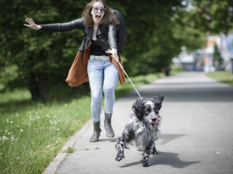 Làm cách nào để bạn có được một chuyến đi bộ suôn sẻ và tốt đẹp với một chú chó không chạy qua chạy lại | Huấn luyện chó đi bộ với dây xích để có thể hình tốt hơn
