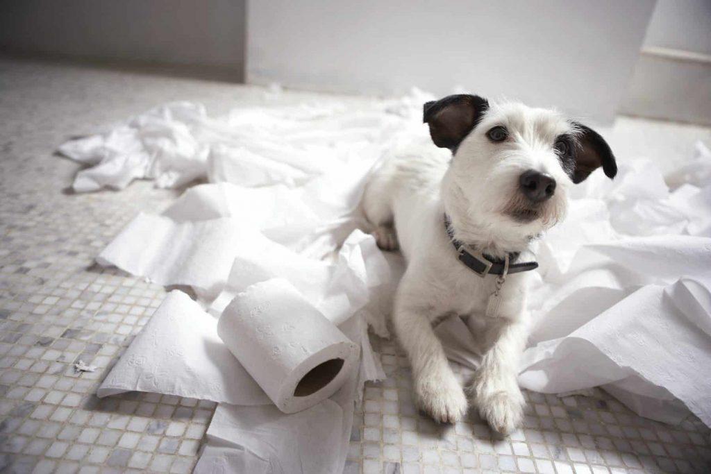Buồn chán gây dư thừa quá nhiều năng lượng | Cách làm phong phú thói quen sống của chó cưng