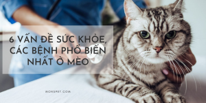 6 vấn đề sức khỏe, các bệnh phổ biến nhất ở mèo